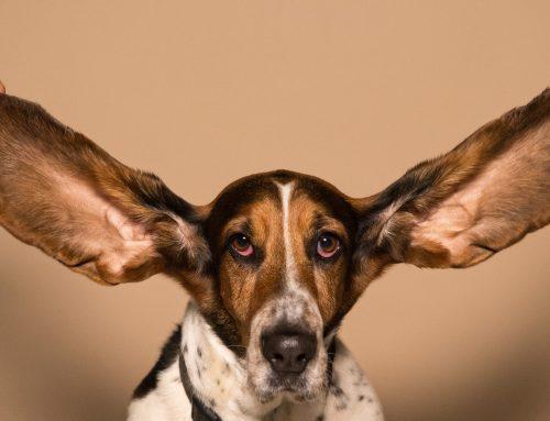 Savoir écouter le client, écouter les autres partenaires, écouter sans parler